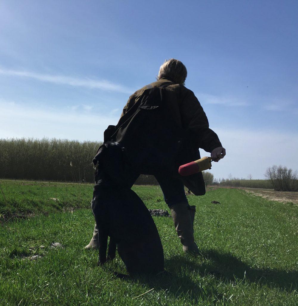 Kennel fielding